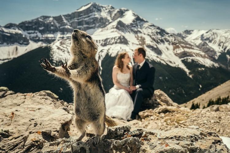 жених невеста и сурок в горах