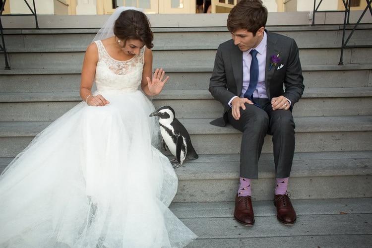 жених и невеста сидят на ступеньках с пингвином