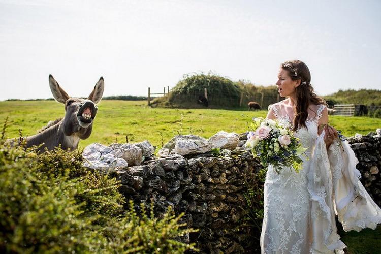 осел кричит на невесту