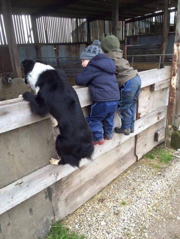 собака и дети на заборе
