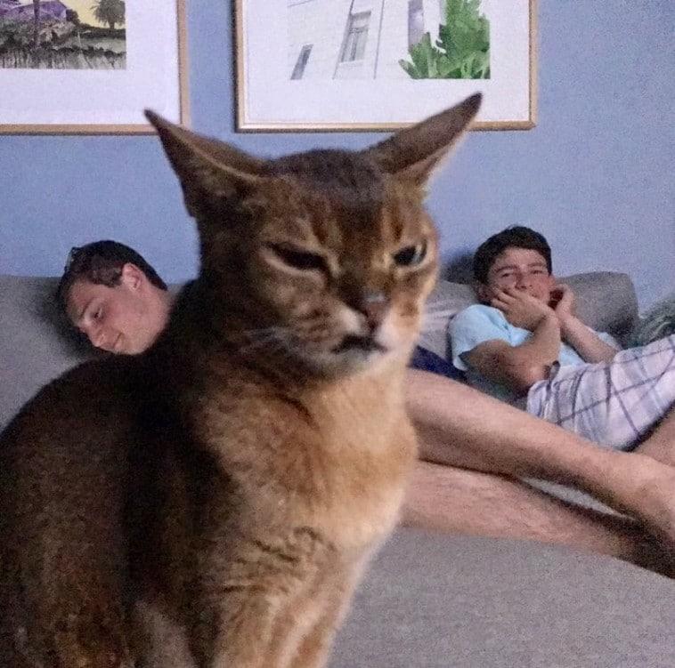 кот на фоне двух парней