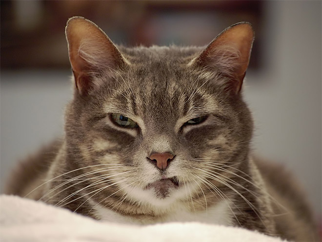 кот прищурился