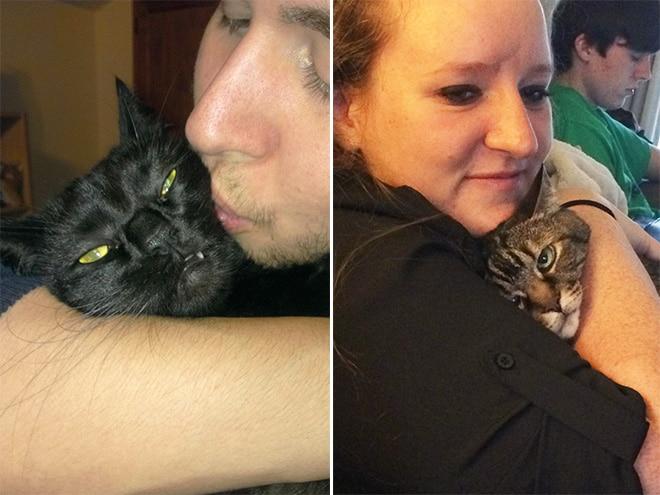 коты на руках