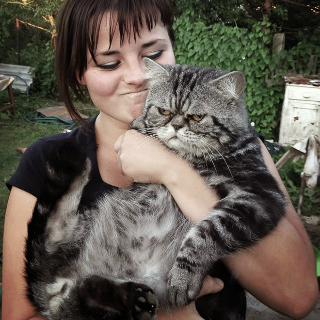 серый кот на руках у девушки