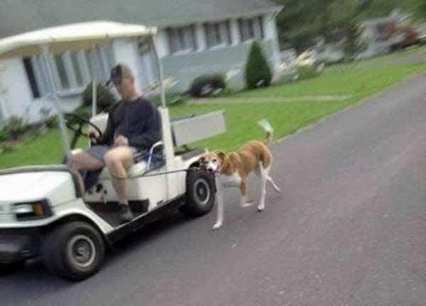 мужчина выгуливает собаку, сидя в машине