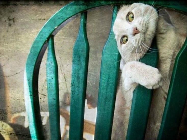 кот застрял в стуле