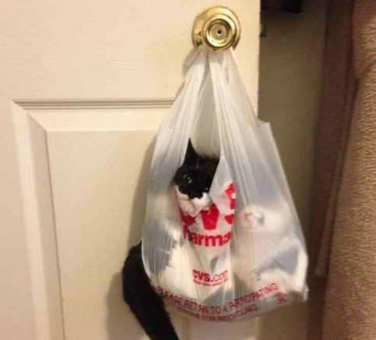 кот застрял в пакете