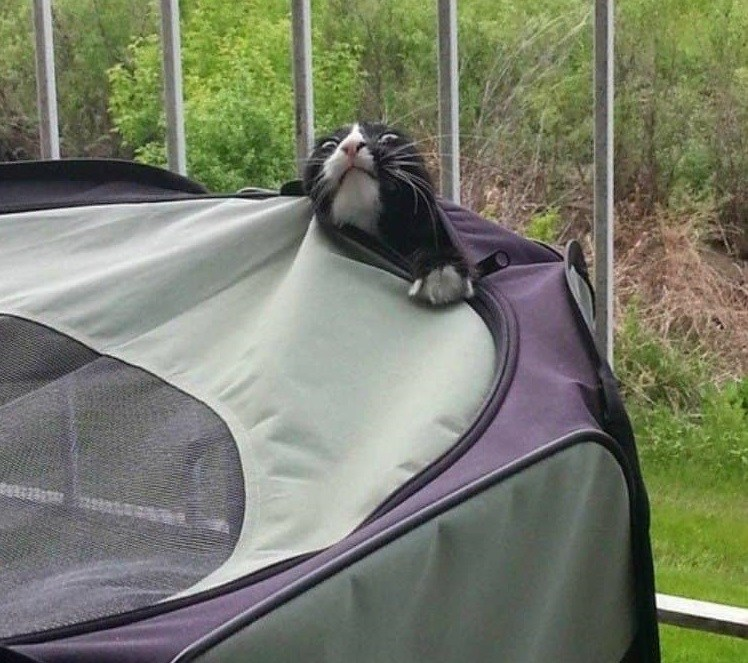 кот застрял в переноске