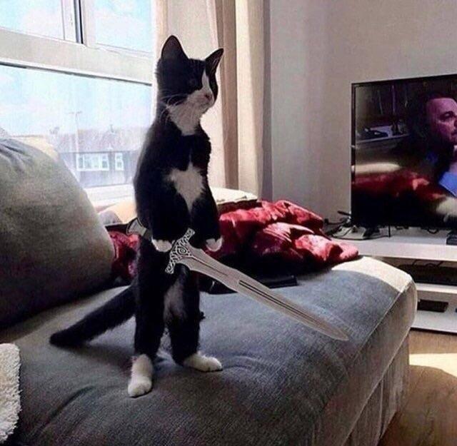 черно-белый кот стоит на задних лапах с мечом