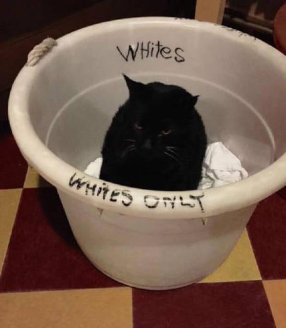 черный кот сидит в ведре