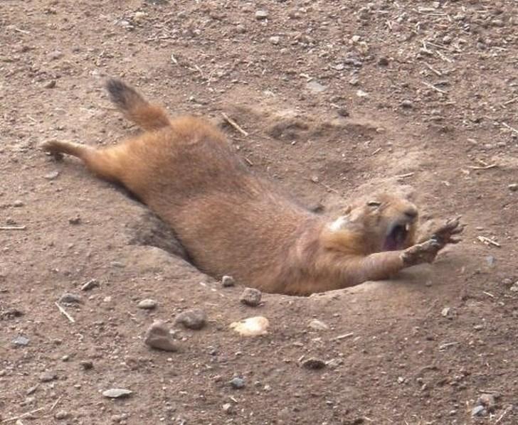 грызун упал в яму