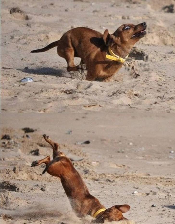пес бежит по песку