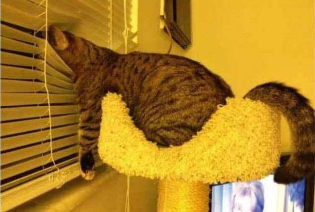 Любопытный кот