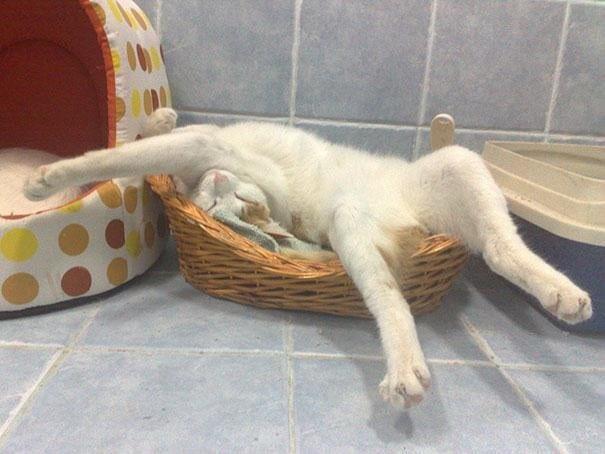 Кот спит в корзине