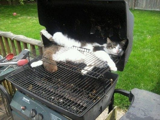Кот на барбекюшнице