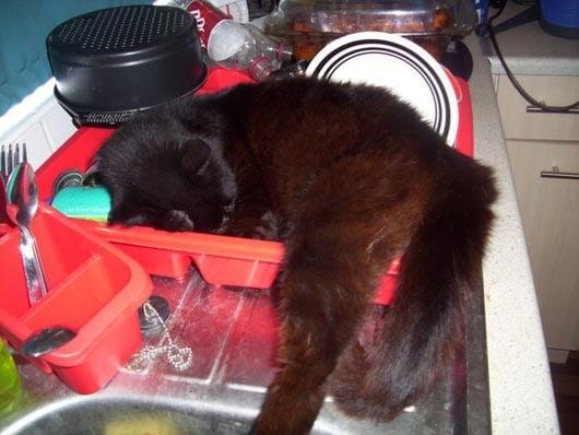 Кот на кухонной мойке