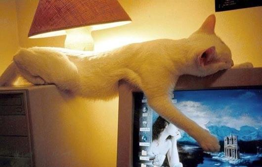 Кот на компьютере