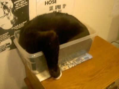 Кот в пластиковой коробке
