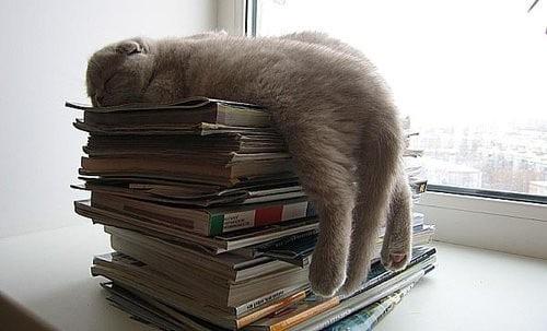 Кот на стопке книг