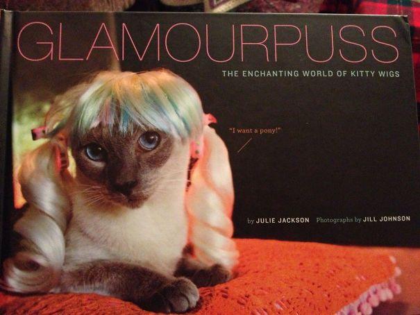 книга про кошек