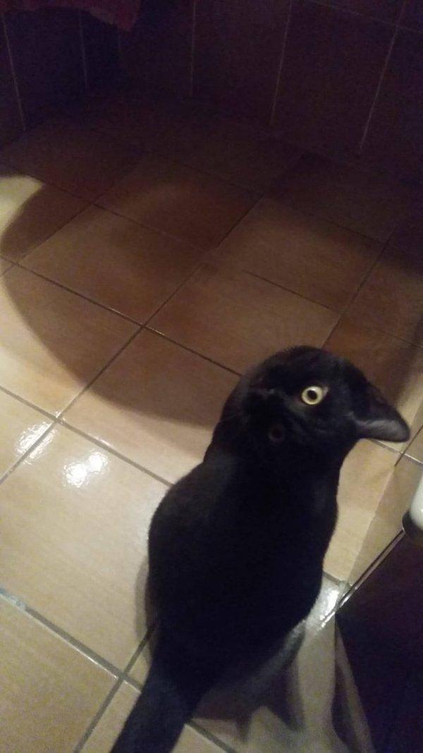 черная кошка на полу