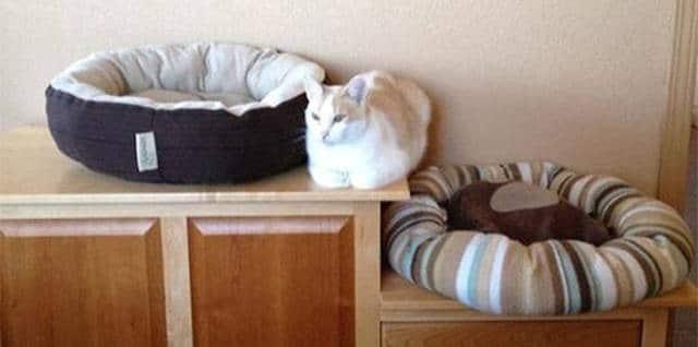 кот и две лежака