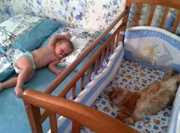 рыжий кот спит в кроватке