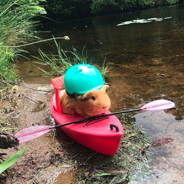 хомяк в лодке с веслом