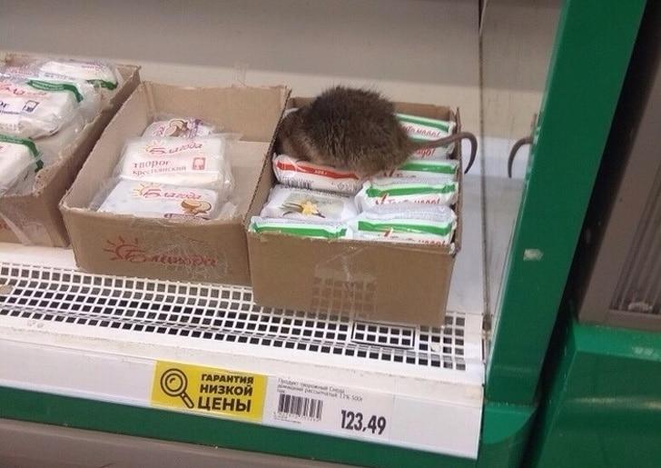 крыса в супермаркете