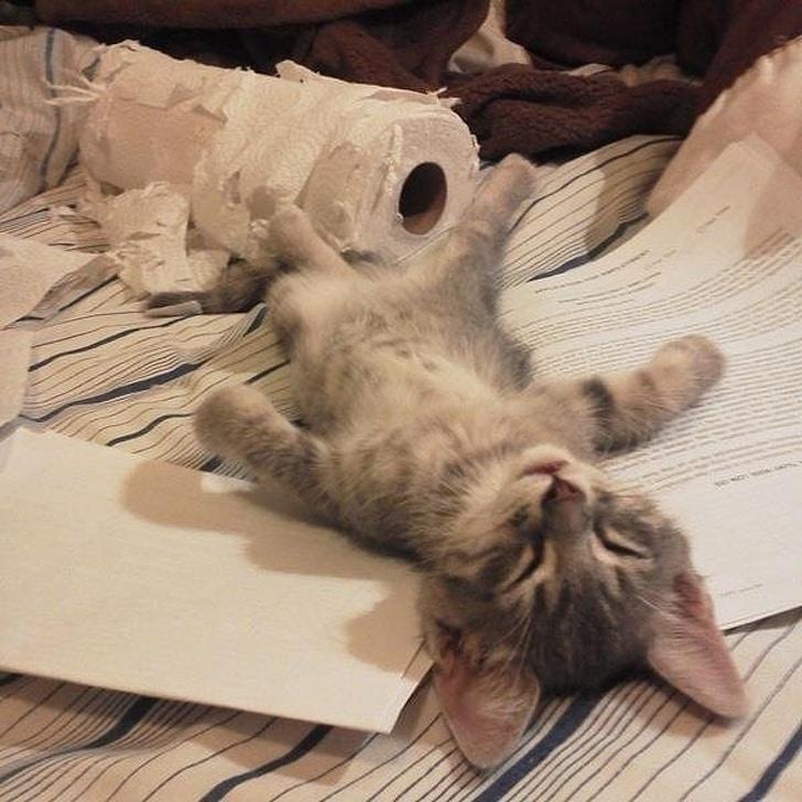 серый котенок спит на разорванном рулоне бумаги