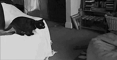 черный кот прыгает на подушку