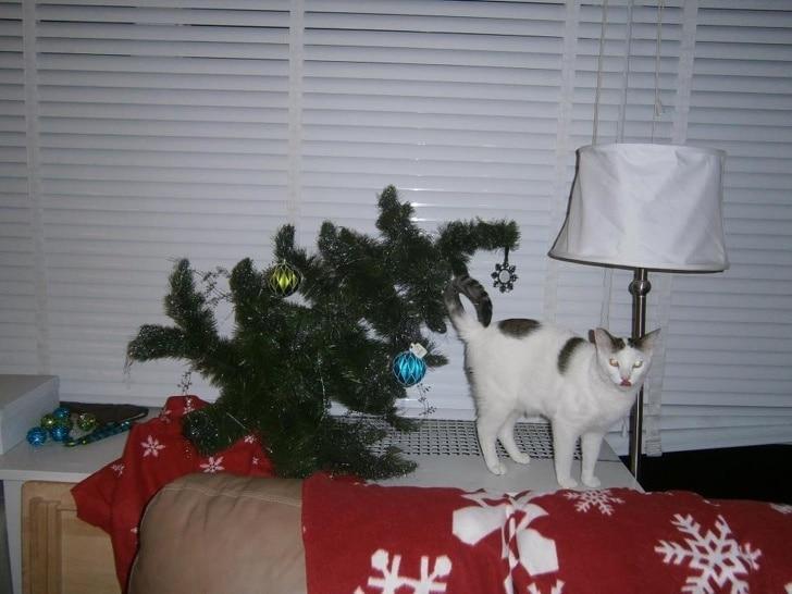 коты и елки