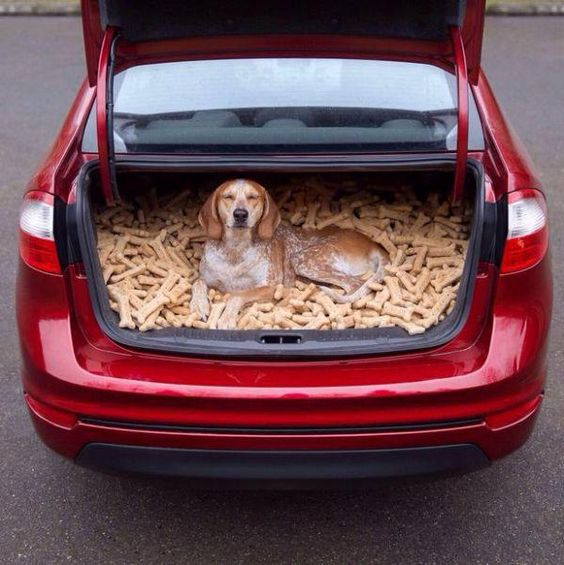 собака в багажнике авто