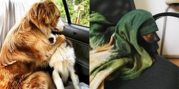 животные у ветеринара