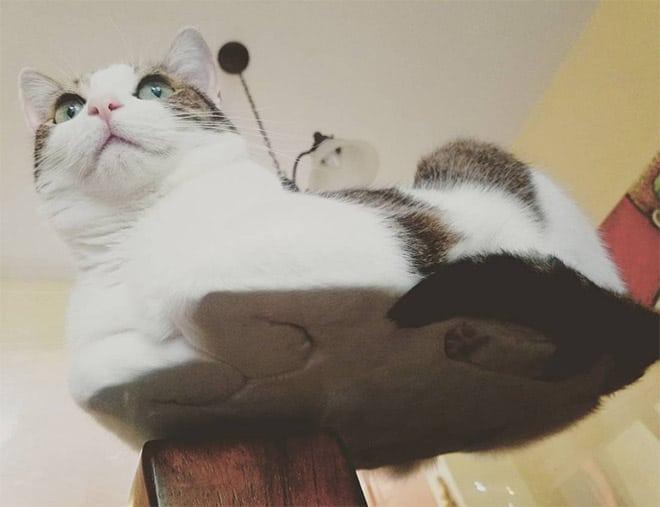 кошка сидит, сложив лапки под себя