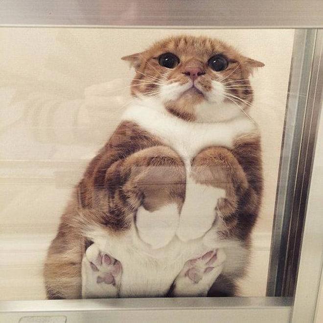 рыже-белый кот