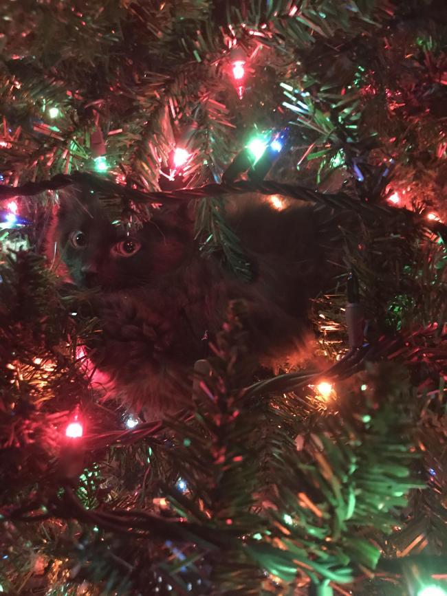 серый кот на елке