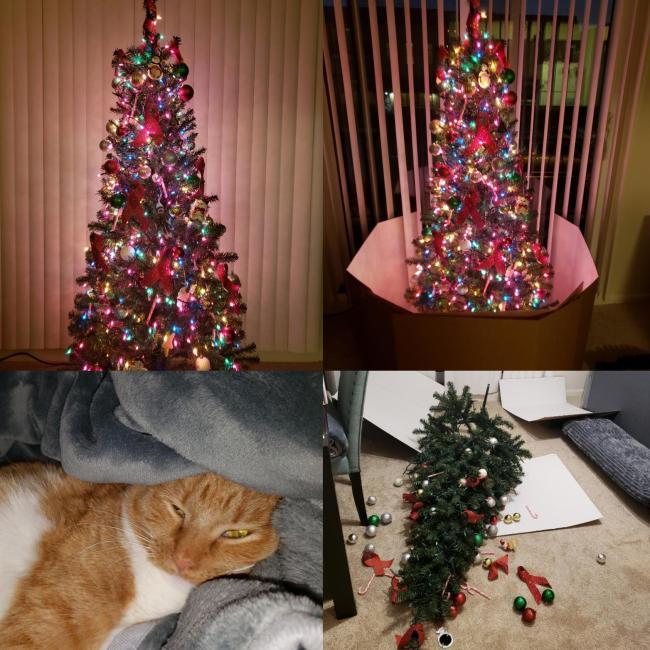 рыжий кот и елка