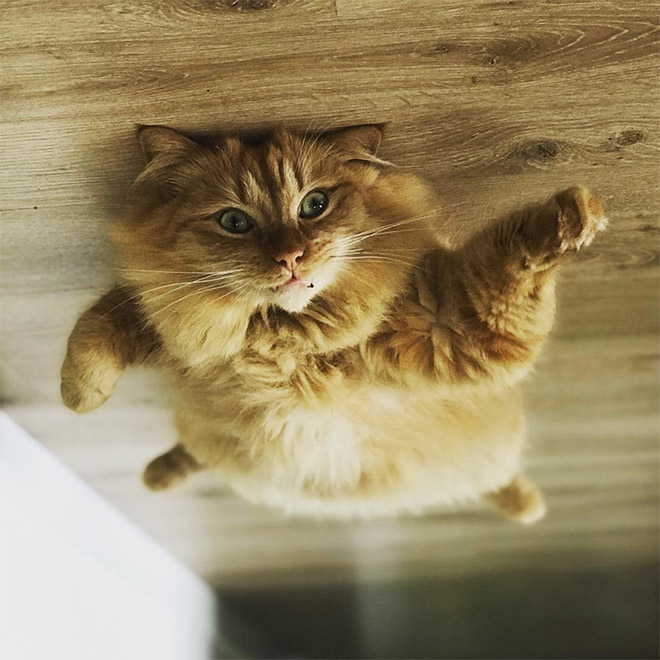рыжий кот лежит на полу