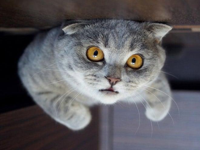 серый кот с рыжими глазами