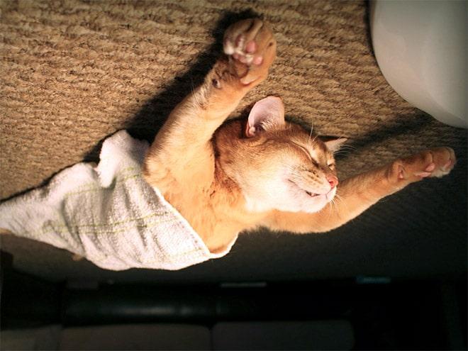рыжий кот спит с вытянутыми лапами