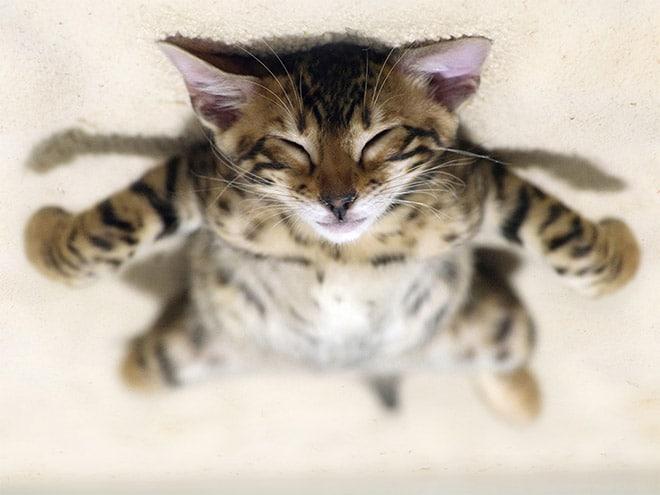 полосатый кот спит
