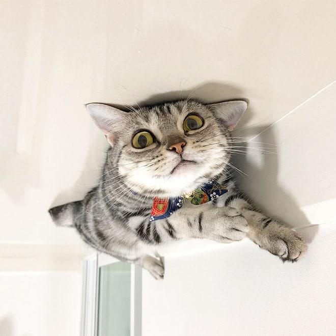 серый кот в полоску