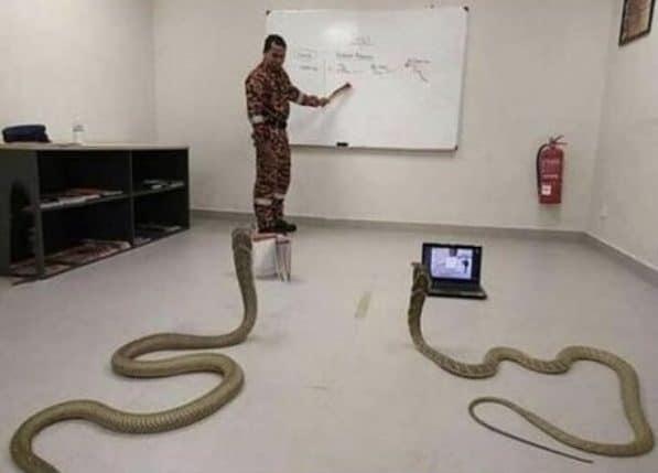учитель змей