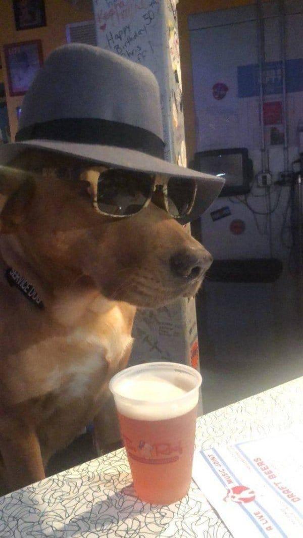 собака в очках и шляпе