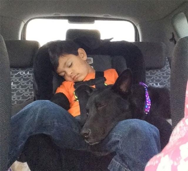 мальчик спит с собакой в авто