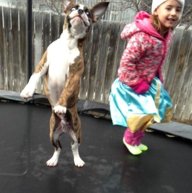 девочка и пес прыгают на батуте
