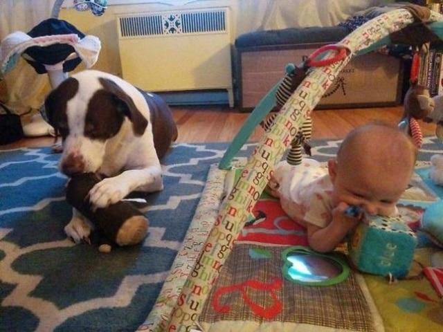собака и ребенок играют