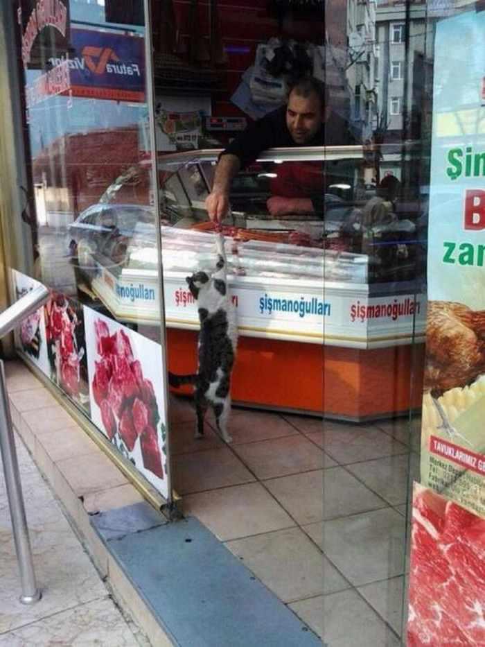 продавец подкармливает кота