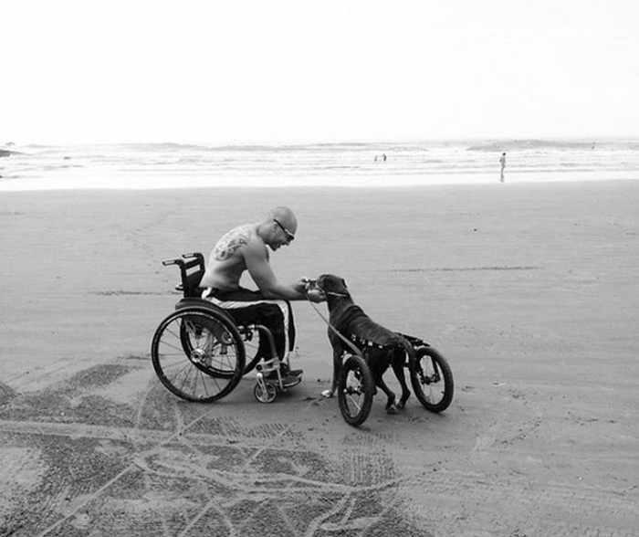 мужчина на коляске и его пес-инвалид
